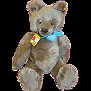 SALE 18 Inch Vintage Caramel Original Steiff Teddy Bear 1981 #0202/51