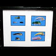 SALE Fly Fishing Flies Framed