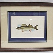 SALE Framed Print of Walleye  in Color 50% Off