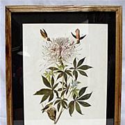 SALE Hummingbird Audubon Print Framed 50% OFF
