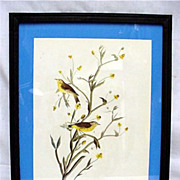 SALE Yellow Palm Warbler  Audubon Print Framed