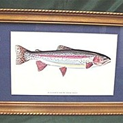 SALE Rainbow Trout Framed Print