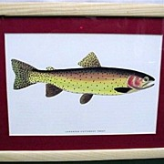 SALE Cutthroat Trout Print Framed 50% OFF