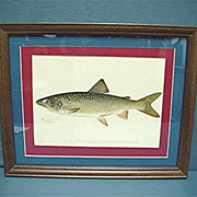 SALE Lake Trout Framed Fish Print Signed Denton  50% OFF