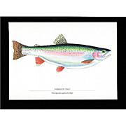 SALE Print Kamloops Trout