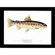 SALE Print Oregon Redband Trout
