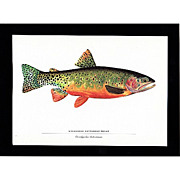 SALE Print Greenback Cutthroat Trout