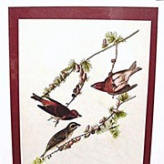 SALE Audubon Print Purple Finch No. 4