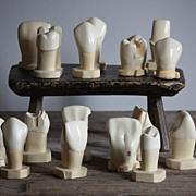 Vintage Anatomical Tooth Model Set - Dental School Teaching Aid