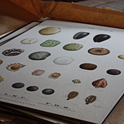 Vintage Danish Seeds Charts - Botanical Teaching Charts