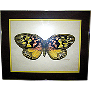 SALE Sera graph Print, Butterfly, original, signed and dated, Paul Richards, 1973
