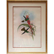 JOHN GOULD Hand Colored Lithograph of Hummingbirds
