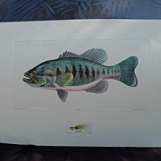 SALE Dan Mitra Etching, Large Mouth Bass, Ltd. Ed. No. 100/350