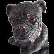Glass Eyed Syrocco Bull Dog