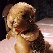 SALE Steiff Beaver