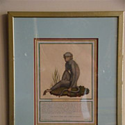 Antique hand colored print of monkey L'Atys