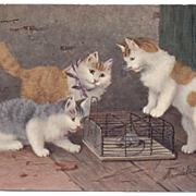 SALE Artist signed KITTEN 3 CATS postcard 1905 German printed