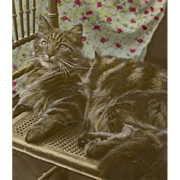 SOLD Antique Real Photo Postcard of Gray Tabby Cat Colorized by Hand 1910