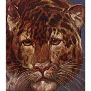 Paris Zoo Leopard Postcard Artist Signed Ludwig Fromme Unused