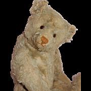 "MAGNIFICENT 16"" Antique Steiff Teddy Bear"