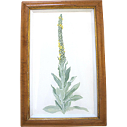 ORIGINAL Tempera BOTANICAL Floral Plant Painting by Portland Artist Sally Haley
