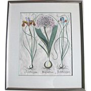 Original Hand-Colored Copper Plate Botanical Engraving c1640 by Besler