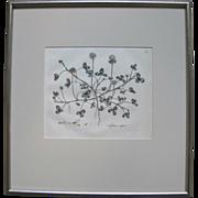 "Antique Framed Hand Colored Botanical Engraving Print by William Curtis ""Trifolium Repens"