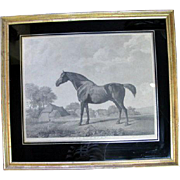 George Townly Stubbs 18th Century Engraving British Sweet Brier Horse