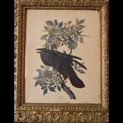 Audubon RAVEN ... Corvus Corax  Male ... No 21 .. Plate C 1