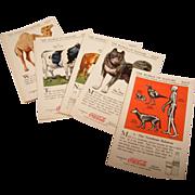 Coca-Cola Nature Study Cards in Original Box
