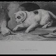 Landseer Antique Print Steel Engraving Dog Terrier 'Too Hot To Hold'