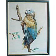 Blue Parrot John Baxendale  1919-1982 English Bird Watercolor Watercolour
