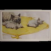PUSHTI Kay Nixon - Original Watercolour watercolour of Siamese Cats Cat Kittens Kitten for the