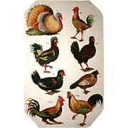 French Rooster Engraving 19th Century Hand Colored
