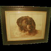 St. Bernard Watercolor Framed England 19th Century