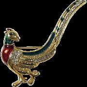 SALE Pheasant