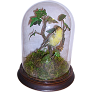 SOLD Antique Victorian Taxidermy Bird in Glass Dome Gold Finch - Red Tag Sale Item
