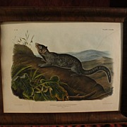 Original edition JOHN WOODHOUSE AUDUBON (1812-1862) Imperial size 19th century lithograph of s