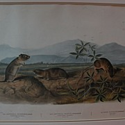 JOHN JAMES AUDUBON (1785-1851) original large folio lithograph print by the American naturalis