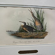 "JOHN J. AUDUBON hand colored 19th century lithograph print ""Clapper Rail or Salt Water Ma"