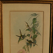 JOHN GOULD (1804-1881) hand colored lithograph print of hummingbirds by noted ornithologist il