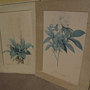 PIERRE-JOSEPH REDOUTE (1759-1840) botanical  art **PAIR** of hand colored stipple engraving ..