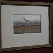 Signed wildlife art fine detailed contemporary original watercolor painting of flying male mal