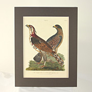 """Hand colored engraving """"The doubtful Hawk, tufted Goshawk"""" dated 1805"""
