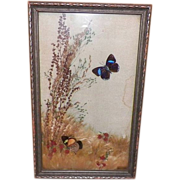 REDUCED Vintage Framed Pressed Butterflies and Dried Flowers Under Glass