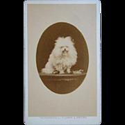 Antique CDV Photograph, Lion Mane Furry POODLE Dog, France