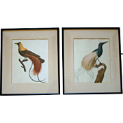 2 Gorgeous ANTIQUE Framed Color Engravings on Silk, Exotic BIRD OF PARADISE