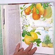 SALE Garden Book Flowers Botanicals 1st Edition Lush Floral Plates
