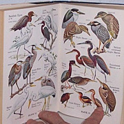 SALE Audubon Water Bird Guide 1st Edition 1951 Full Color Plates