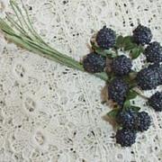 Blackberry   Spray
